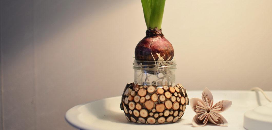 hyacintkruka